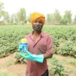 New insecticide from BASF helps Indian farmers protect crops and increase yields