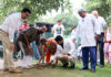 Knee replacement patients plant saplings