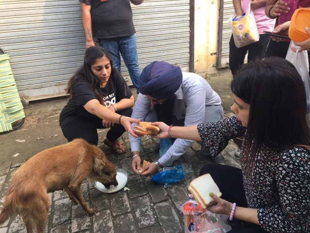 Kindness to Animals Campaign held in Zirakpur