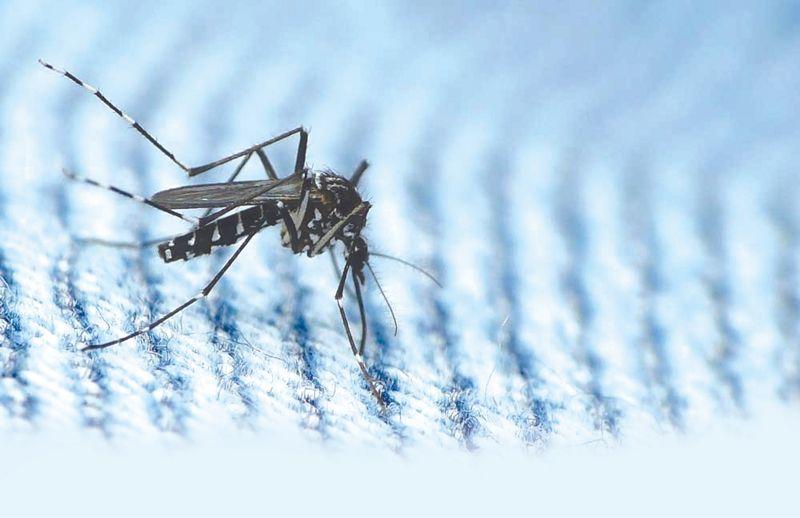 2 teenagers succumb to dengue in Mohali